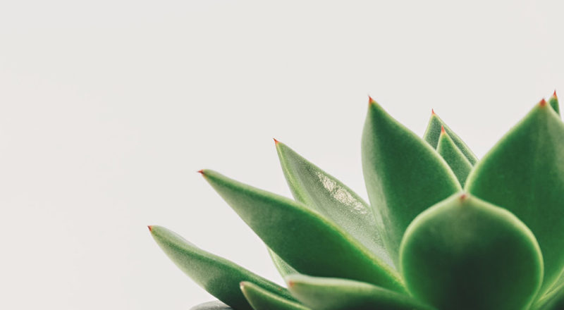 How to cultivate a slower more meaningful life
